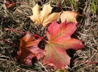 Bunte Herbstblätter im Gras - Schmidt & Schmidt Immobilien